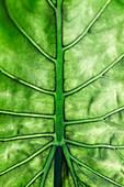 Underside of leaf, extreme close-up