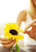 Woman plucking petals from flower, close up.