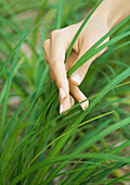 Woman's hand touching blades of grass