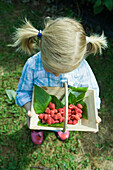 Little girl holding basket of raspberries, high angle view