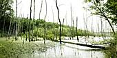 Wetland in Brandenburg, Germany