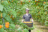 A man holding a crate full of apricots in an orchard