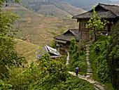 A man walking down a Dong village footpath near terraced rice paddies, Guangxi, China