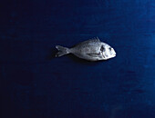 Directly above shot of raw sea bream on blue table
