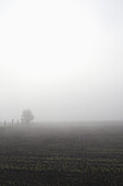 Tranquil view of agricultural field in foggy weather against clear sky