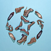 Various leopard print shoes arranged in a pattern