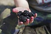 Cropped image of girl holding fresh blackberries