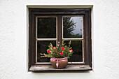Pot plant on window sill