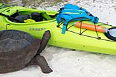 Schildkröte begutachtet Kajak, Seekajaktour auf den Seychellen, Indischer Ozean