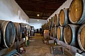 Weinfässer, Weinmuseum El Grifo, Weinanbaugebiet La Geria, Lanzarote, Kanarische Inseln, Spanien