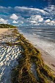 Beach at Falkenstein, Kiel Fjord, Baltic sea, Friedrichsort, Kiel, Schleswig-Holstein, Germany