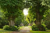 Lindenallee, Schlosspark Kittendorf, Mecklenburg-Vorpommern, Deutschland