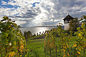 Vineyard near Meersburg to the lake, Lake Constance, Baden-Wuerttemberg, Germany