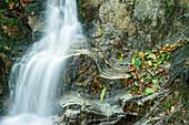 Stream with Autumn leaves, Ticino, Switzerland