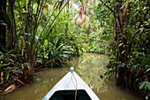 Rainforest at Sandoval Lake, Tambopata National Reserve, Peru, South America