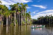 Tourist boat and Mauriti Palm Trees, Buriti, Moriche Palms, at Sandoval Lake, Mauritia flexuosa, Tambopata National Reserve, Peru, South America
