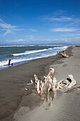 Driftwood on the beach of La Paz bei Laoag City, capital of Ilocos Norte province on the main island Luzon, Philippines, Asia