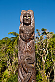 Maori carving at Ship Cove, Outer Queen Charlotte Sound, Marlborough, South Island, New Zealand