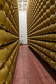 parmesan cheese maker Tassi Roberto, caseificio Sociale Fior di Latte Soc. Coop, parmesan production, aging rooms, coll storage, Parmigiano-Reggiano, Italy