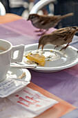 sparrows on table, pecking at leftovers outside cafe, Venice, Italy