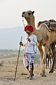 India, Rajasthan, On the way to Pushkar camel fair.