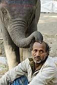 India, Bihar, Patna region, Sonepur livestock fair, Friendly baby elephant and mahout.
