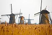 19 mills at the 'kinderdijk' near Rotterdam.
