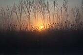 sunrise at natural park 'de biesbosch', holland.