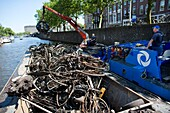 Removing bicycles from the canals in Amsterdam.