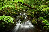 Hawaii, Maui, Lush Stream In Iao Valley