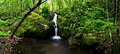 Hawaii, Kauai, Napali Coast, Hanakoa Stream Surrounded By Lush Greenery