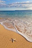 Hawaii, Maui, Makena, Starfish On Beautiful Shoreline