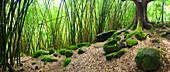 Hawaii, Kauai, Napali Coast, Bamboo Grove On Trail To Hanakapiai Falls