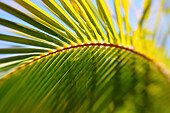 Artistic Shot Of A Palm Leaf And Branch, Shallow Depth Of Field.
