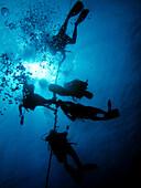 Hawaii, Big Island, Kohala Coast, Scuba Divers On Line.