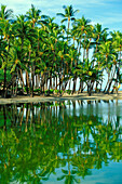 Cluster Of Palm Trees At Shore Of A Peaceful Lagoon, Reflections In Water
