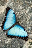 Butterfly, Niagara Botanical Gardens, Niagara Falls, Ontario