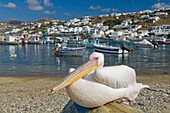 Pelican Perched On Boat In Harbour Of Aegean Sea, Hora, Mykonos Island, Cyclades, Greece