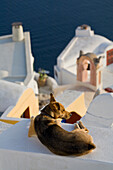 A Dog Laying On A Wall In The Village Of Oia, Santorini, Greece