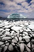 Floating Ice Shattered From Iceberg, Quirpon Island, Newfoundland & Labrador