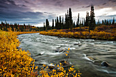 View Of Brushkana Creek In The Early Morning With Yellow Fall Colors Along The Creek, Denali Highway, Southcentral Alaska, Autumn