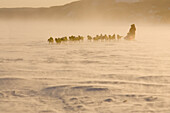 The Norwegian Couple Tove Sorenson & Tore Albrighsen Run On Yukon River In Blowing Snow 2006 Iditarod