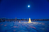 Christmas Tree Standing On Snow Covered Tundra At Twilight, Spruce Forest And Chugach Mountains In The Background, Winter, Anchorage, Alaska