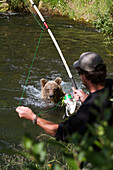 Sow Brown Bear Standing In The Russian River Watches A Fisherman Close By On The Riverbank, Kenai Peninsula, Southcentral Alaska, Summer