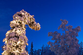 Snow covered spruce tree adorned with Christmas lights, Fairbanks, Alaska