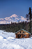 Dog musher Martin Buser runs his team during a spring training run on a lake with Mt. Mckinley and Alaska Range in the background and log cabin in foreground. Southcentral, Alaska