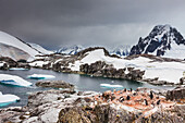 'Gentoo penguins (Pygoscelis papua) and icebergs off the shore of Peterman Island; Antarctica'