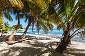 'Palm trees and white sand beach on Laughing Bird Caye National Park; Belize'