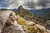 'Lizard on the stone wall of Machu Picchu, the ancient lost city of the Incas, one of Peru's top tourist destinations; Peru'