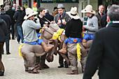 'Horse racing festival; Cheltenham, Gloucestershire, England'